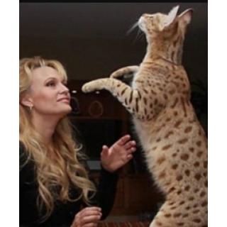 Для больших кошек
